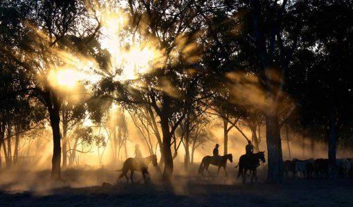 Horse Riding in Jindabyne
